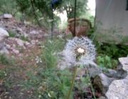 Nature Boom