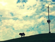 dog on the hills